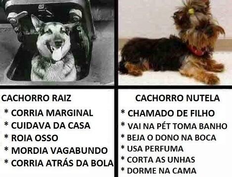 cachorro raiz nutella