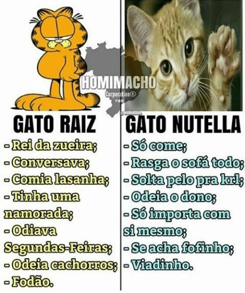 Gato Raiz x Gato Nutella