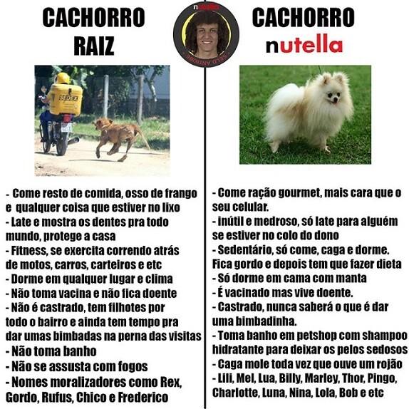 top memes cahorro raiz cachorro nutella